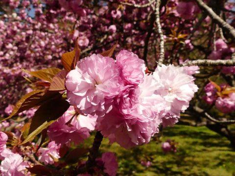京都御苑と併せて楽しめる