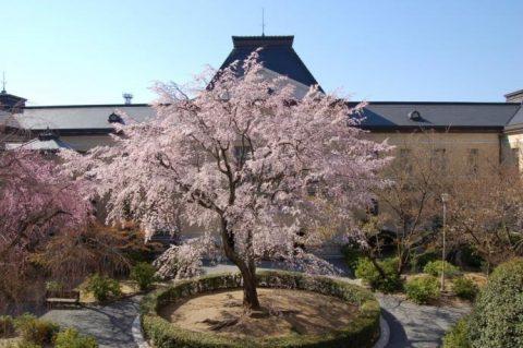 シンメトリーな建物にしだれ桜