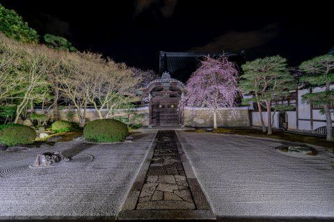 春の特別拝観では夜桜も