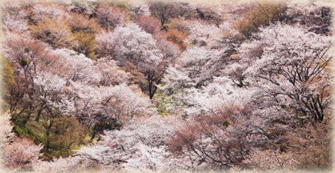 世界遺産に選ばれた「吉野山」