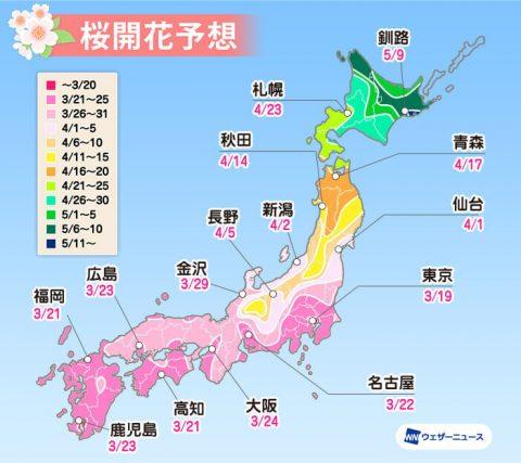 京都の桜は4月上旬から中旬が見ごろ