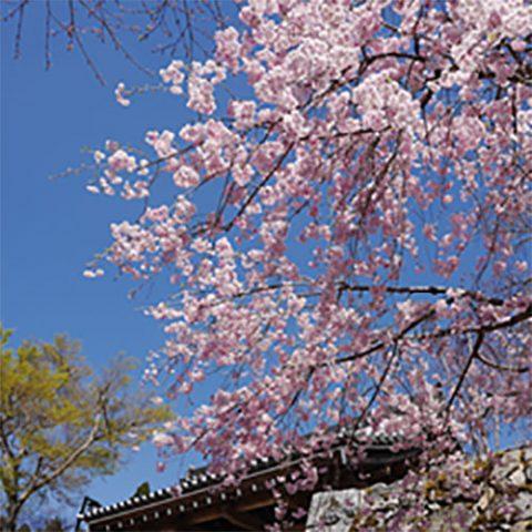 京の隠れ里/三千院