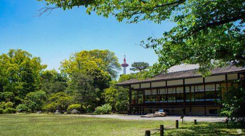 桜越しの京都タワー