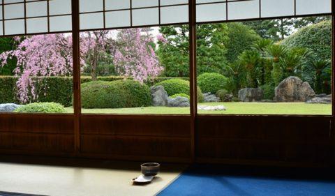 茶室で桜を見ながら抹茶